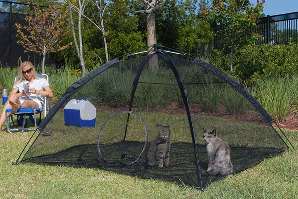Help Your Indoor Cat Enjoy The Outdoors With These Cool Toys